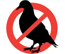 northern virginia bird control service, pigeon problems, bird traps, pigeon control services, alexandria, springfield, alexandria, bird, arlington, manassas, mold service virginia