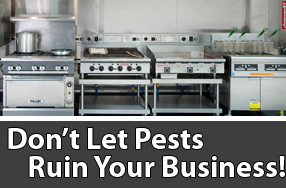 commercialpest control services for your restaurant and resl estate property in Northern Virginia, Alexandria, Arlington, termite control and cockroach and rodent problem solutions.